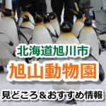旭山動物園の見どころはこれ!ペンギンの散歩の他にも魅力が満載
