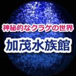 加茂水族館のクラゲ水槽「クラネタリウム」が美しすぎる!おすすめ温泉・宿泊施設もご紹介