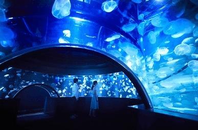 京都水族館のアクセス