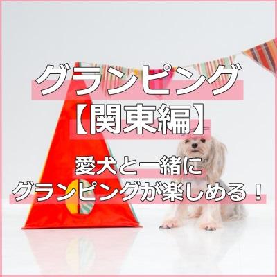 グランピング【関東】犬と一緒に宿泊できる嬉しいグランピング施設をご紹介します!