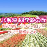 北海道美瑛町の四季彩の丘が絶景すぎる!見頃の時期やアクティビティ、ランチ情報まとめ!