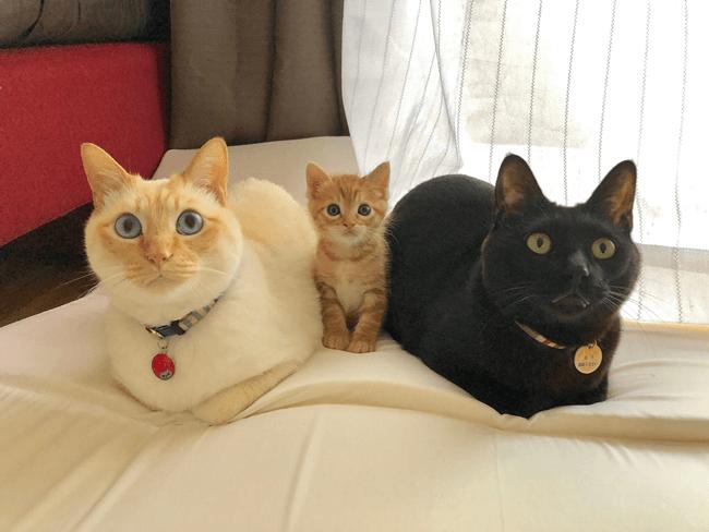 3匹の猫ちゃんず