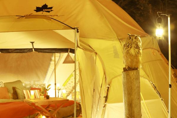 フクロウとキャンプ
