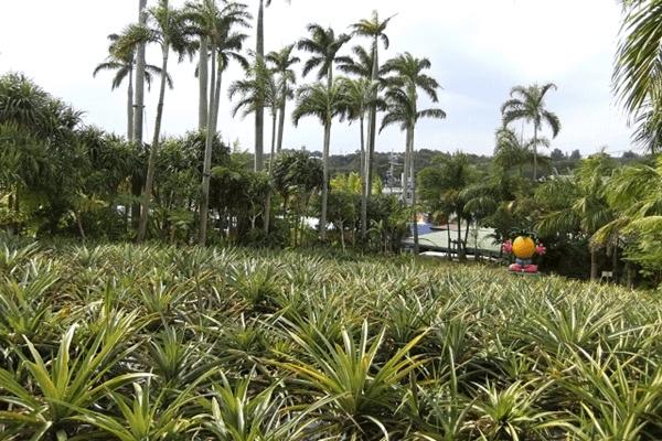 沖縄北部エリア