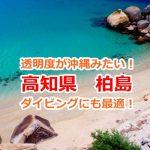 海の魚たちと一緒に泳げちゃう!ダイビングに最適な高知県柏島
