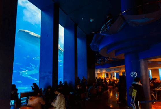 水族館カフェ