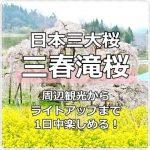三春滝桜の見頃はいつ?周辺観光→夜のライトアップまで1日楽しもう!