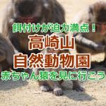 高崎山自然動物園は猿の赤ちゃんの名前と大迫力の餌付けに注目!