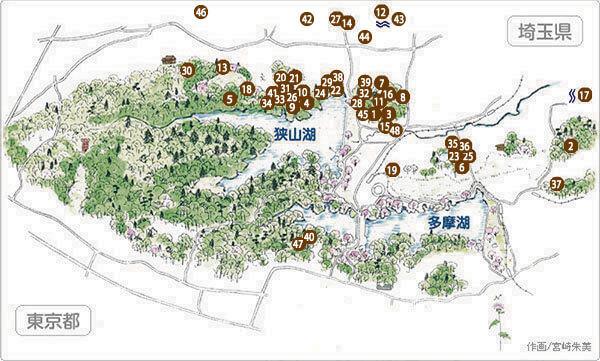 トトロの森 マップ