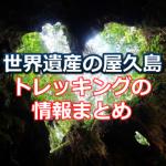 屋久島への旅行を計画!屋久杉トレッキングに行く前に知っておきたい情報まとめ